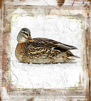 Riverstone Gallery Photograph - Winter Hen by Allyson Schwartz