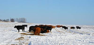 Photograph - Winter Herd by Bonfire Photography