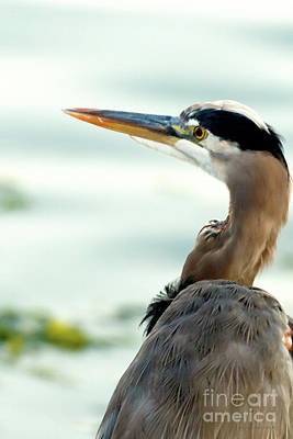 Photograph - Winter Heron by Beve Brown-Clark Photography