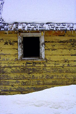 Photograph - Winter Hide Out by Julie Lueders
