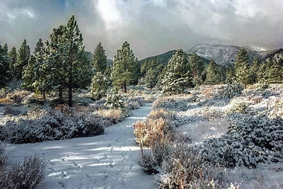 Photograph - Winter Hike by Maria Coulson