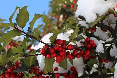 Photograph - Winter Holly by Georgia Hamlin