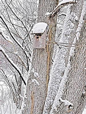 Staff Picks Cortney Herron - Winter Home 1 by Brenda Plyer