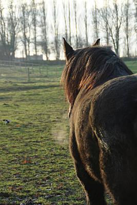 Photograph - Winter Horse by Brandy Herren
