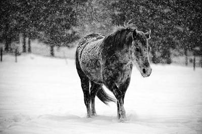 Wall Art - Photograph - Winter Horse by Mark Courage