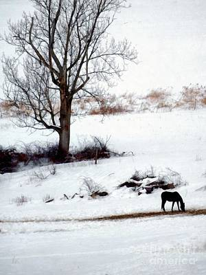 Photograph - Winter Horse Pasture 1 by Janine Riley
