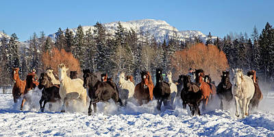 Photograph - Winter Horse Roundup by Jack Bell