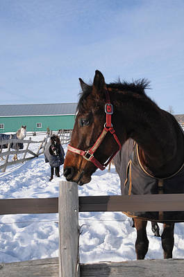 Photograph - Winter Horses II by Louise Fahy