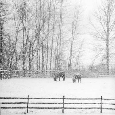 Photograph - Winter Horses by Joann Long