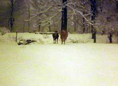 Digital Art - Winter Horses by Joyce Wasser
