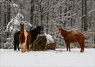 Photograph - Winter Horses by Kathryn Meyer