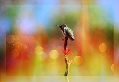 Hummingbird Photograph - Winter Hummer With Light And Border by Lynn Bauer