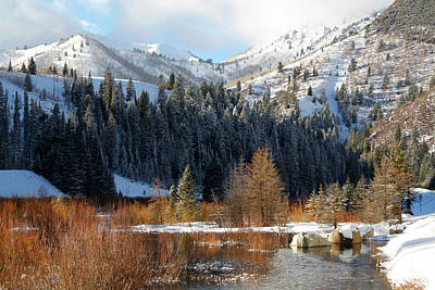 Photograph - Winter I Big Cottonwood Canyon  by Utah Images