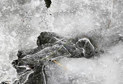 Photograph - Winter Ice 1 by Mary Bedy
