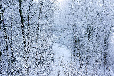 Winter Ice Storm Art Print