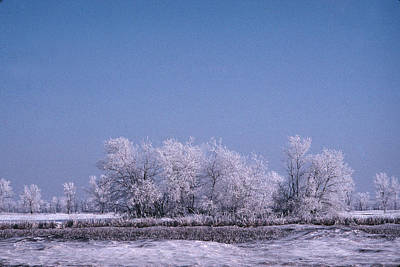 Photograph - Winter Ice Tree by William Kimble