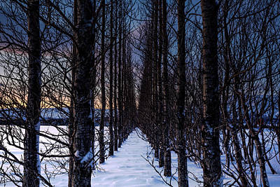 Photograph - Winter Illusions by Clifford Toy