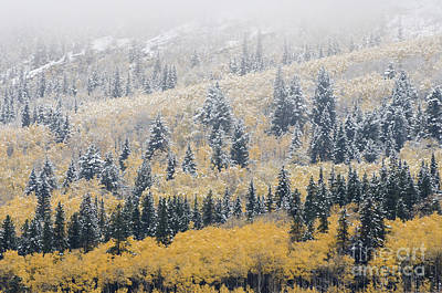 Photograph - Winter In Fall by Dee Cresswell