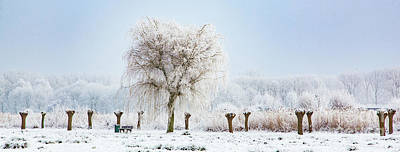 Photograph - Winter In Holland by Casper Cammeraat