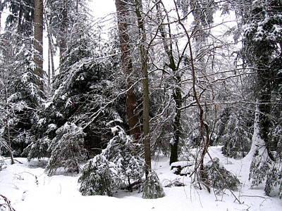 Winter In Krauchthal IIi Art Print by David Ritsema