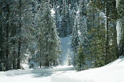 Photograph - Winter In Pine Tree Forest by Masha Batkova