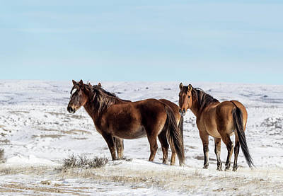 Photograph - Winter In Sand Wash Basin - Wild Mustangs by Nadja Rider