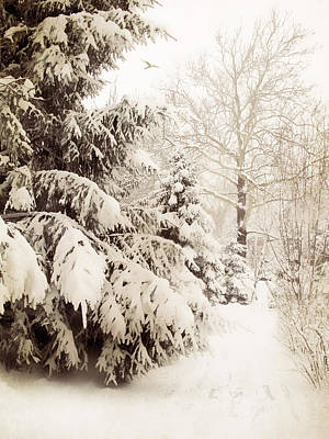 Photograph - Winter In Sepia by Jessica Jenney