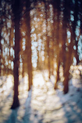 Photograph - Winter In Snow by Amber Flowers