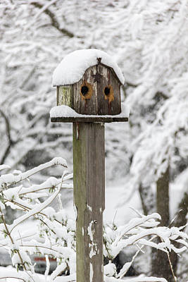 Photograph - Winter In Spring Birdhouse 2 by Keith Mucha