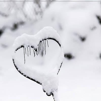 Photograph - Winter In Spring Frozen Heart by Keith Mucha