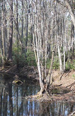 Photograph - Winter In Stillwater Swamp by rd Erickson