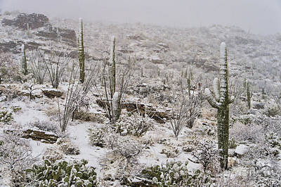 Snowstorm Photograph - Winter In The Desert by Sandra Bronstein