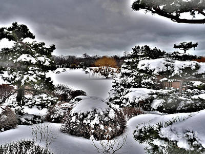 Photograph - Winter In The Garden by David Bearden