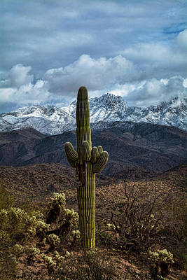 Photograph - Winter In The High Deserts Of Arizona  by Saija Lehtonen
