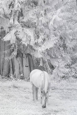 Photograph - Winter In The Meadow by Wes and Dotty Weber