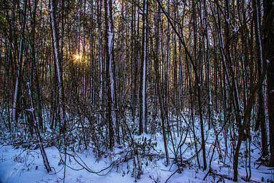 Photograph - Winter In The Pines by John Harding