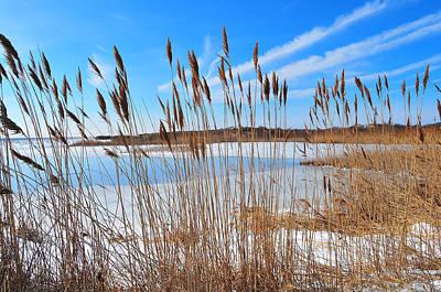 Winter In The Salt Marsh Art Print