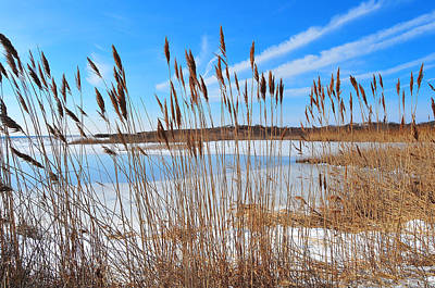Winter In The Salt Marsh Art Print by Catherine Reusch Daley