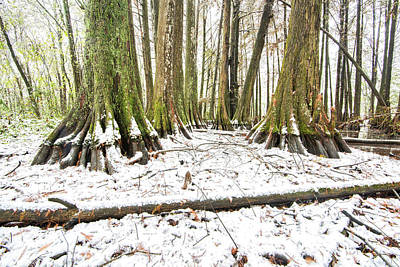 Photograph - Winter In The Swamps by Andy Crawford