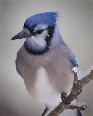 Bluejay Digital Art - Winter Jay by Lana Trussell