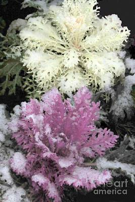 Photograph - Winter Kale by Frank Townsley