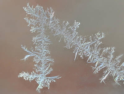 Photograph - Winter Lace by Lara Ellis