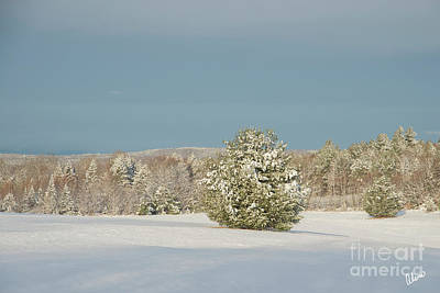 Photograph - Winter Landscape by Alana Ranney