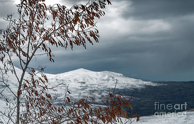 Photograph - Winter Landscape by Anna Om