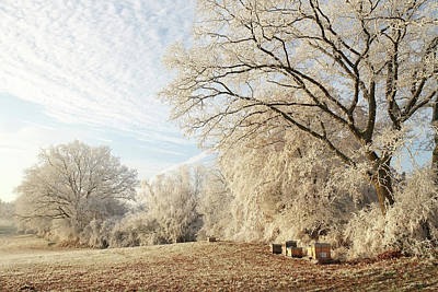 Photograph - Winter Landscape In Hoar Frost Beehives In The Sun by Martin Stankewitz