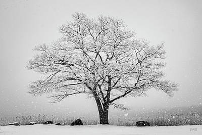 Photograph - Winter Landscape Vi Bw by David Gordon