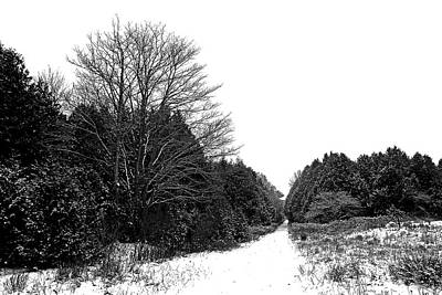 Photograph - Winter Lane by Debbie Oppermann