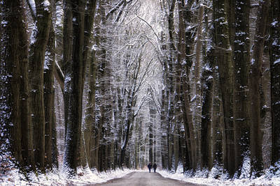 Winter Trees Photograph - Winter Lane by Martin Podt