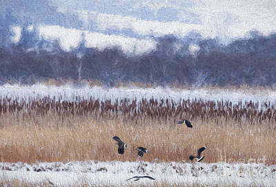 Lapwing Digital Art - Winter Lapwings by Liz Leyden