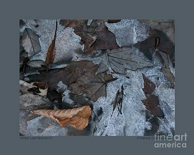 Photograph - Winter Leaf Abstract-iv by Patricia Overmoyer